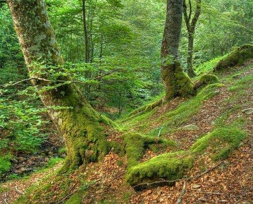 ruta por el bosque de peloño