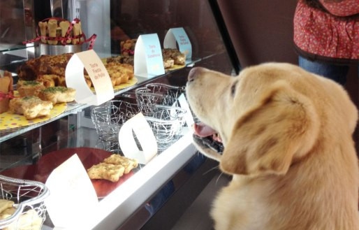 restaurantes y bares que admiten mascotas